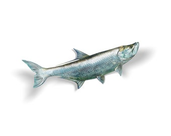 Tarpon Decal, Tarpon Sticker, Tarpon, Silver King
