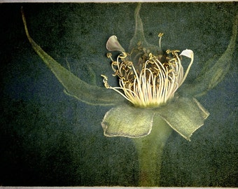 botanical photograph, fine art photo print photography, flower, floral, vintage, petal leaves, botannical home decor