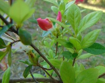 Pink Flower Bud Photo