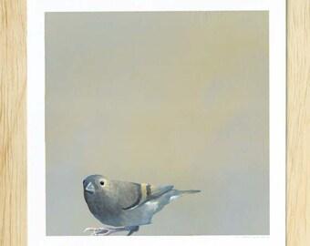 SALE! The Inimitable Hail-Fellow-Well-Met Cock Of The Walk I Call Dad 8 x 8 Art Print - Bird - Nature - Gift - Mincing Mockingbird