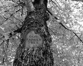 Our Family Tree, Digital tree carving with message, Fall Tree-Looking Up, Print, Bl & Wh, Display family photos, 3 size options
