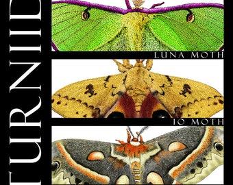 Moths of North America