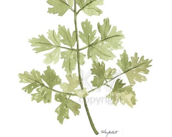 Watercolor Painting Parsley Herb Print, Watercolor Wall Art Housewarming Gift Kitchen Decor Botanical Print, Herbs Kitchen Art, Gift for Her