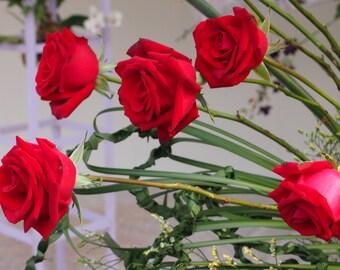 Heirloom 100 SEEDS Red Roses Fire Bush Rose Garden Double Flower Organic Bulk Perennials B3001