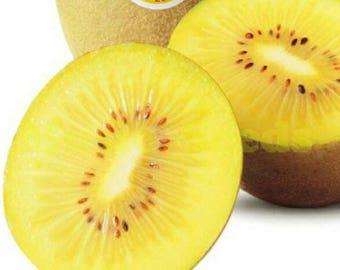 100 New Zealand Sweet Golden Kiwi Fruit Kiwifruit FRESH SEEDS