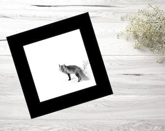 30X30, Nature, Photography, Black and white, Fox