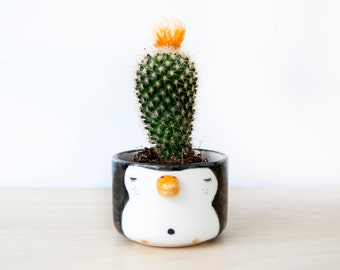 Ceramic penguin planter, Cute ceramic penguin plant pot, Succulent planters, Ceramics & pottery, Planter flower pot, Kawaii animals planters
