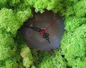 Mossclock green1