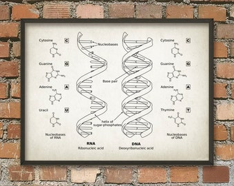 Dna print genetics art science poster patent prints dna dna and rna wall art poster biology student art poster genetics art print malvernweather Choice Image
