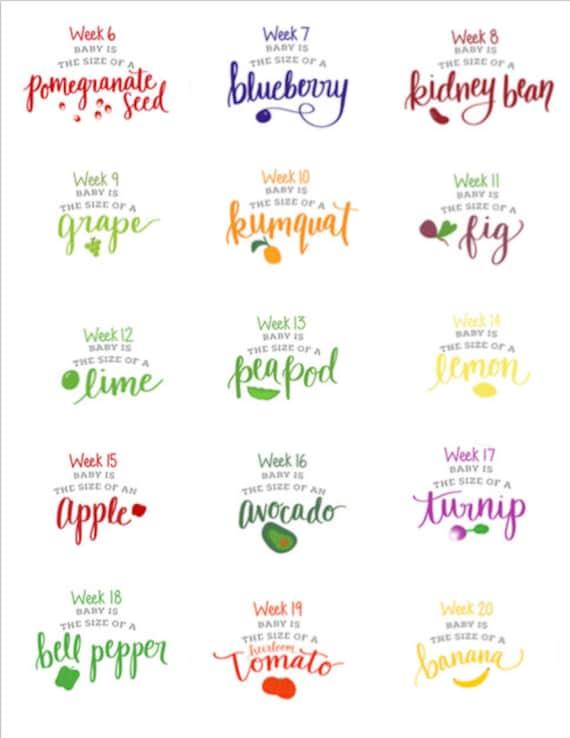 Printable Pregnancy WeekByWeek Signs Corresponding Fruits