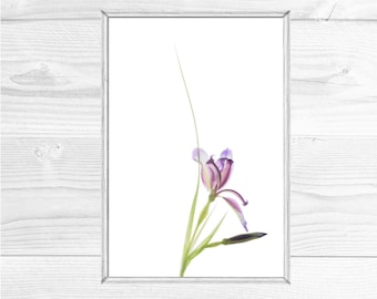 Printable Iris Art, Asian Inspired Art, Modern Iris Flower Print, Minimalist Art, Purple Iris Wall Decor, X-Ray Effect