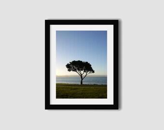 New Zealand Photography print // NZ photography // Hawkes Bay print // Tree print // Travel photography // Wall art // Wall decor