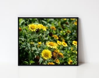 Wall art print, Art print, Fine art print, Flower print, Wildflower print, Yellow flowers print, Yellow wildflower print