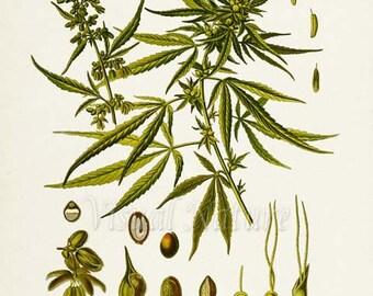 Nude women with marijuana plants — photo 14