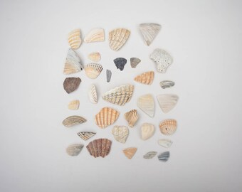 SHELL FRAGMENT LOT, broken seashells, coastal decor, mosaic art, nautical, natural supplies, vase filler, organic decor, wedding decor, ooak