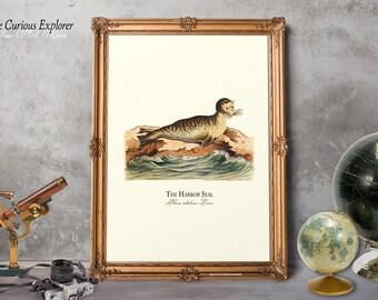 Seal Art Poster, Funny Seal Print, Seal Baby Gift, Animal Print, Seal Nursery Decor, Seal Wall Art, Seal Boy Gift - E18_3