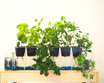 Aquaponics Garden, 6-planter Aquaponics System, Desktop Herb Garden, Self-Watering Planter, Indoor Garden, Aquaponics