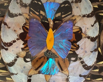 Breathtaking Butterfly Specimen Inlay Wooden Tray Got it at The Plastic Flamingo If nothing ever changed there'd be no butterflies ART DECO