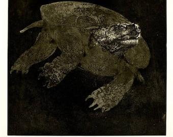 "Thomas Cornell etching. ""Turtle II"" Ed.46/100"