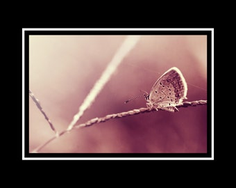 Butterfly Photograph, Ethereal Photo Print, Dusty Rose Pink Nature Photography, Horizontal Bedroom Wall Art, Butterfly Fine Art Nature Photo