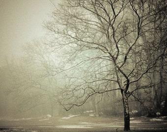 Winter Mist Nature Photograph - Foggy -  Mysterious - Winter Tones - Pale Winter - Bare Trees - Nature Landscape Photograph