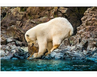 Polar Bear, Bellot Strait, Northwest Passage, Blank Photo Card, Arctic, Notecard, Wildlife Photo Card, Nature, Bears