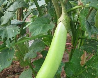 200 seeds 80 seeds Green long eggplant  seeds heirloom green vegetable