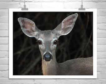Deer Picture, Deer Ears, Animal Picture, Deer Photograph, Wildlife Art, Mule Deer Photo, Deer Art, Art on Canvas, Gift for Animal Lovers