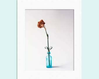 Plant Flower Floral nature heart Still Life Photographic Print