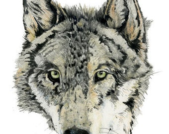 Mr Wolf Print Giclee print of wolf head 8x11 art print