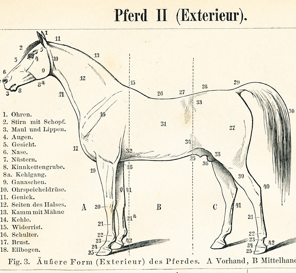 pferd anatomie druck pferd skelett druck pferd muskel system. Black Bedroom Furniture Sets. Home Design Ideas