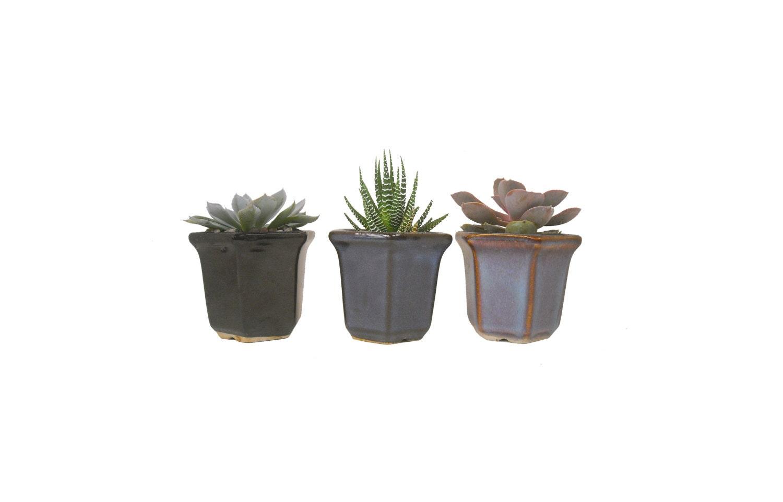 3 Succulent Plant Combination In Hexagon Shaped Ceramic