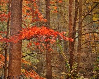 Autumn, Fall, Autumn Photography, Fall Leaves, Fall colors, Mountains, North Carolina, Wall art, Orange Brown,Nature Photography, Landscape