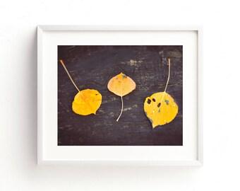 "aspen leaves, fall leaves, art print, wall art, large art, large wall art, nature photography, nature prints, nature prints - ""Leaves Trio"""