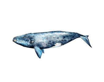 Watercolor Right Whale Print / Watercolor Whale / Watercolor Beach Print / Whale Art / Beach Art