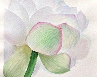 White lotus Original watercolor painting watercolor flowers floral wall art original painting art painting flower painting of flowers