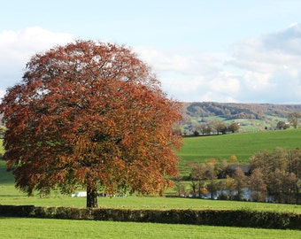 Autumn afternoon (1) - landscape.