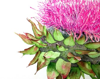 Pink Thistle, Glossy Greeting Card, 5x7 inches