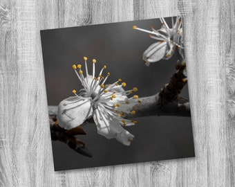Cherry Blossom Photograph Print - Nature Photo Print - Wall Decor - Square Photography Print - Monochrom - Monochromatic