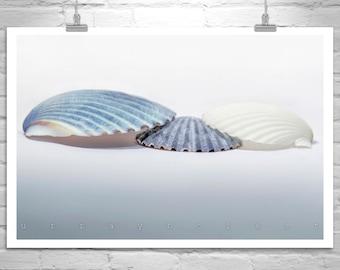Blue Seashell Wall Art, Seashell Wall Decor, Art for Bathroom, Seashell Picture, Aqua Bath Decor, Blue Seashell Photograph, Bathroom Gift
