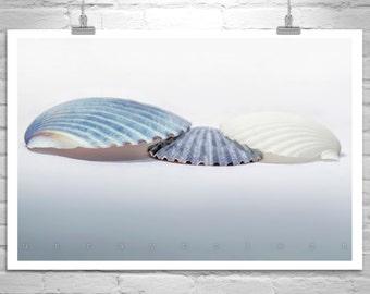 Seashell Decor, Bathroom Wall Decor, Seashell Picture, Aqua Bath Decor, Blue Seashell Photograph, Teal, Art for Bathroom, Pale Blue