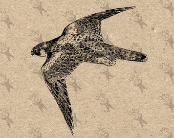 Flying Falcon Eagle vintage image Instant Download Digital printable Black and White clipart graphic decoupage burlap transfer etc HQ300dpi