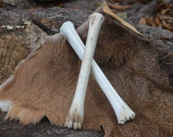 Deer leg bones, Set of 2