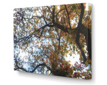 Fall Tree on Canvas