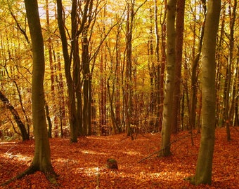 Autumn Woods - Home Fragrance Oil - Warmer / Burner Oil - 2 Fluid Ounces