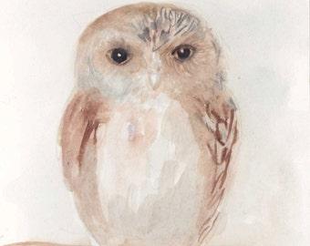 small owl 5 x 7 print