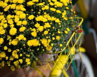 Photo Note Card / Bike & Yellow Mums in basket