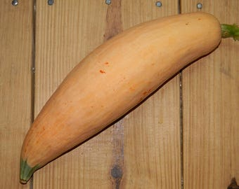 Non GMO Open Pollinated North GA Candy Roaster Squash QTY. 20 {Very Rare Variety}