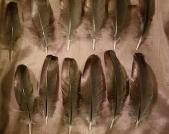 Lot of 12....4 1/2-6 inch Eastern Wild Tom Turkey metallic wing feathers