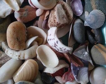 Seashells Handpicked From St. Thomas & Martha's Vineyard Massachusetts. I Can Bundle so see all my goodies!